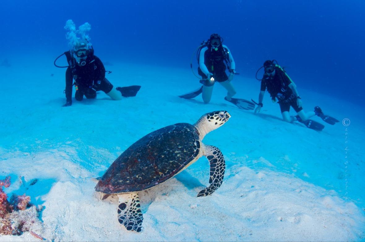 diving phi phi island