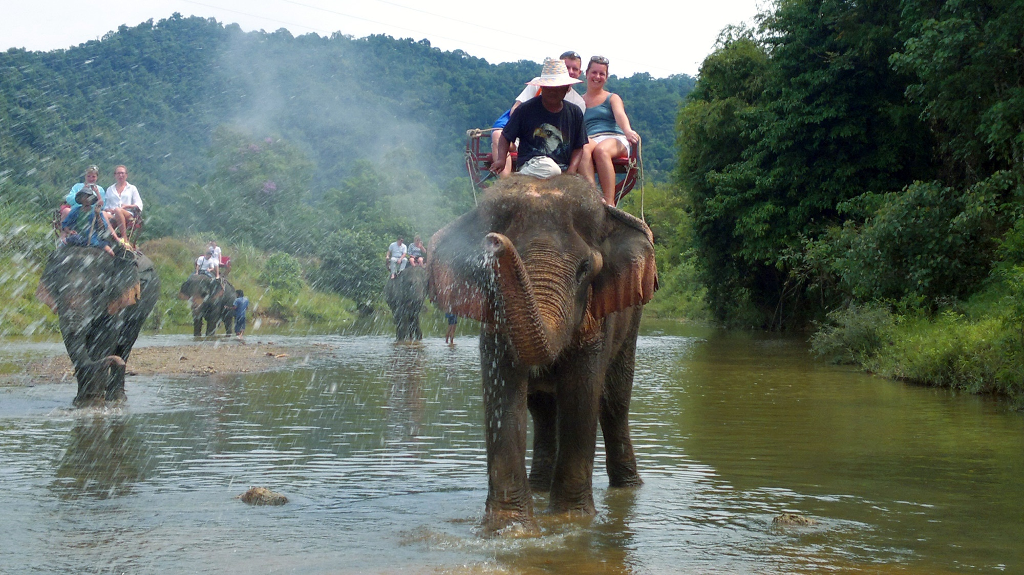 elephant-bathing