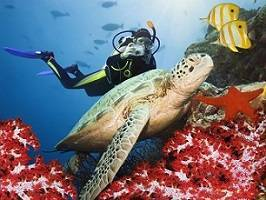 immersioni phi phi island