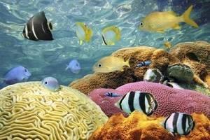 immersioni raya island