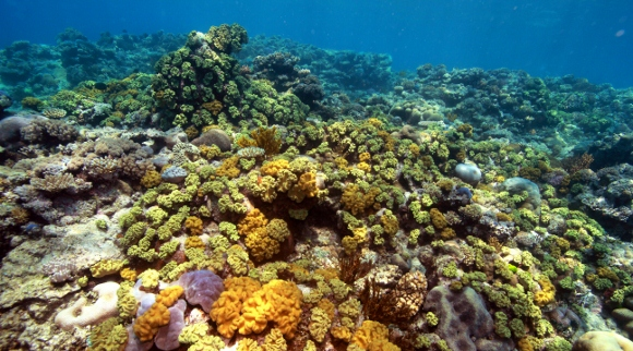 diving raya island