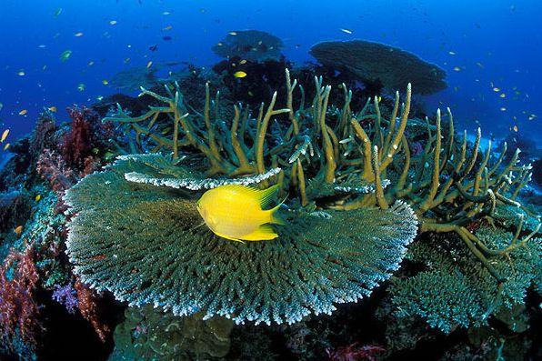 diving similan island