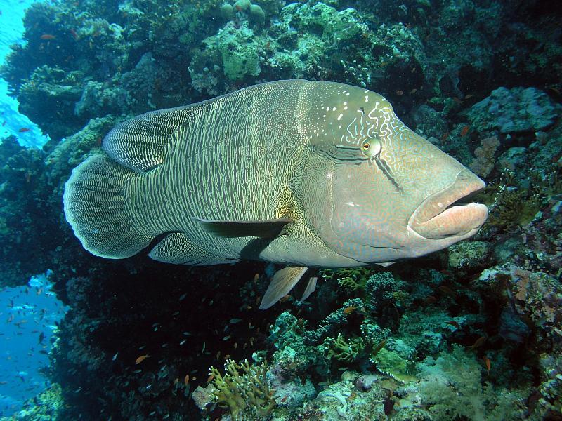 diving-khao-lak-similan-087